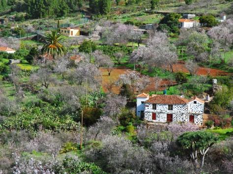 GR130: Almendros en Flor © Patronato de Turismo -  Saúl Santos