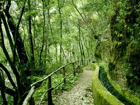 PR-LP-6: Bosque de los Tilos © Patronato de Turismo - Pilar Fernández